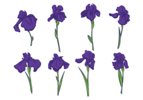 Vecteurs Iris fleurs vecteur