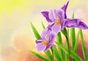 Hand Draw Iris Flower Illustration vecteur