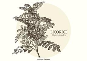Vector Vintage Gravé Réglisse plante