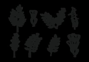 Vector icônes Réglisse