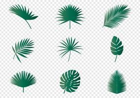 Feuilles de palmier vecteur