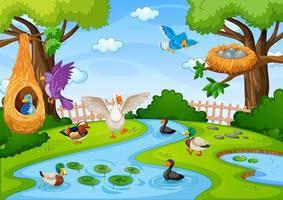 ruisseau dans la scène de la forêt avec de nombreux oiseaux