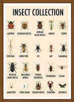 ensemble de collection d'insectes dans un cadre en bois vecteur