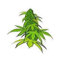 fleur de cannabis verte brillante dans un style dessiné à la main