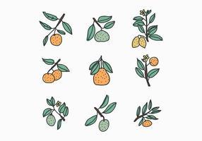 Doodles Citrus vecteur