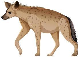 animal hyène sur fond blanc vecteur
