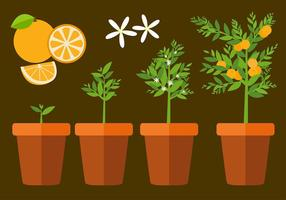 Clementine Plant Free Vector