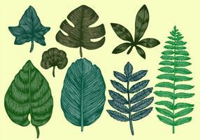Vecteurs de feuilles botaniques style vintage vecteur