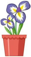belles fleurs dans le jardin sur fond blanc vecteur
