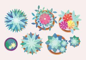Collection Aquarelle de fleurs à l'aquarelle