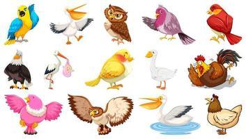 ensemble de style de dessin animé différents oiseaux isolé sur fond blanc