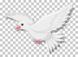 pigeon blanc volant isolé sur fond transparent vecteur