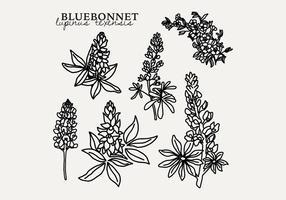Bluebonnet botanique vecteur