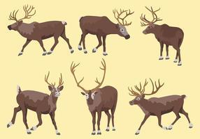Icônes vectorielles de caribous