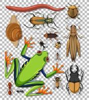 ensemble de différents insectes sur fond transparent vecteur