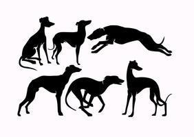 Vecteur whippet chiens silhouettes