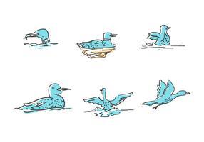 Free Single Loon Bird Vectors