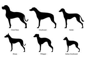 Whippet silhouettes