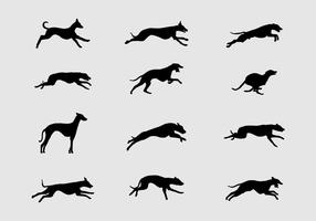 Silhouette whippet