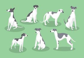 Vecteurs de chien whippet vecteur