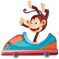 singe à cheval sur petite voiture sur fond blanc vecteur