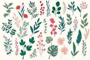éléments botaniques, pack graphique dessiné à la main. vecteur