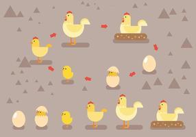 Icônes vectorielles du cycle de vie de la poule vecteur
