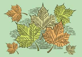 Leaf Illustration Vectorisée