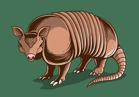 Vector d'illustration d'armadillo