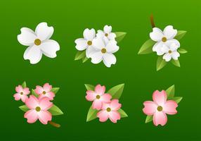 Vecteur libre de fleurs de dogwood
