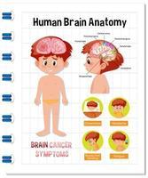 affiche d'information du diagramme du cerveau humain