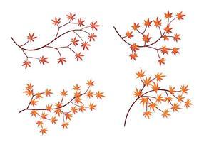 Ensemble de feuilles d'érable japonaises isolées sur fond blanc vecteur