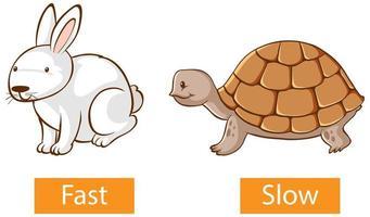 Adjectifs opposés mots avec rapide et lent vecteur