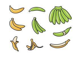 Vectoriel d'élément de plantain