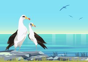 Couple de vecteur d'oiseaux d'albâtre