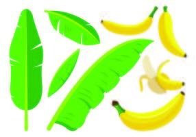 Ensemble d'icônes de plantain vecteur