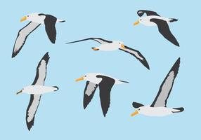 Ensemble volant d'oiseaux d'albatros vecteur