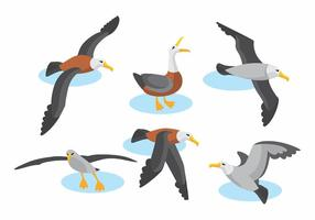 Ensemble de vecteur Albatross