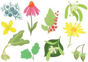Vecteurs de plantes cosmétiques gratuites vecteur