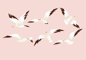 Beau vecteur Albatros