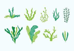 Vecteurs de mauvaises herbes de mer