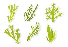 Vecteurs de mauvaises herbes de la mer verte vecteur
