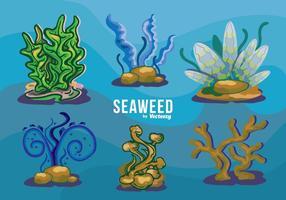 Ensemble de variétés d'algues sous l'eau vecteur