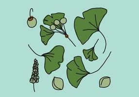 feuilles de ginkgo vecteur