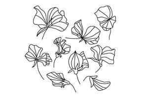 Fleurs de pois sucrés en noir et blanc vecteur