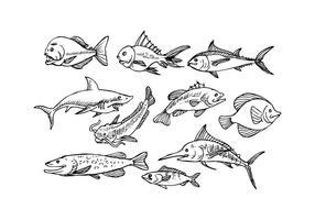 Free Fish Sketch Icon Vector