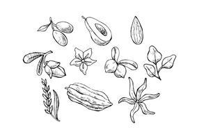vecteur d'icônes d'esquisse gratuite d'herbes