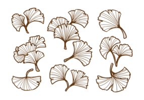 Feuille de Ginkgo dessiné à la main vecteur