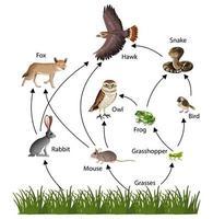 diagramme de concept de chaîne alimentaire vecteur