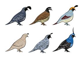 Beau vecteur d'oiseaux à la quail